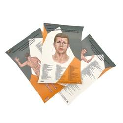 Комплект 3 шт. бумажных плакатов А3 с коробкой Представительство внутренних органов на лице, шее и теле по Огулову А.Т. вид спереди и сзади - фото 4777