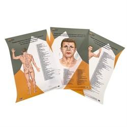 Комплект 3 шт. пластиковых плакатов А2 Представительство внутренних органов на лице, шее и теле по Огулову А.Т. вид спереди и сзади - фото 4787