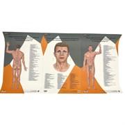 Комплект 3 шт. бумажных плакатов А1 с коробкой Представительство внутренних органов на лице, шее и теле по Огулову А.Т. вид спереди и сзади